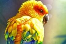 BIRD  a photo