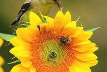 Flores y rosas / Recordar que cada pétalo de una rosa, es una pincelada del Creador.