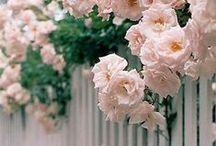 home / gardens / by suziebeezie