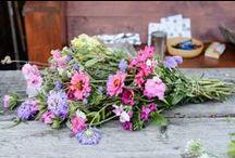 home / flowers / by suziebeezie