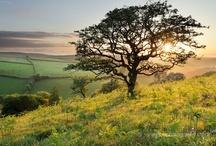 Hawthorn Trees / Cool looking Hawthorn trees. / by J Paul Hawthorne