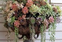 Repurposed Yard Ideas & Gardening / Ideas that are inspiring for DIY and individuality. Most of these ideas are creative and fun; redefining purpose.