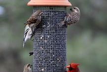 DIY Bird Feeders / Unique ideas for DIY bird feeders.