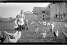 Chickens of Yesteryear...