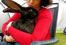 Foreverbunny / All beautiful things rabbit and bunny related for your home. / by Jayne Smith