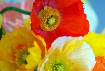 Love flowers / by maria