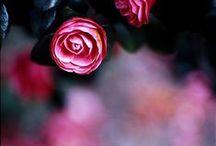 Flowers, floral display, gardening / Floral display, flowers i love, interior flower display