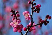 inspirational images of Spring, flowers of spring, colourful decor / Flowers, colours of spring