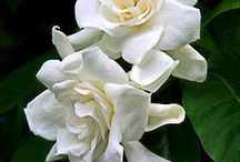 kwiaty / doniczkowe i ogrodowe
