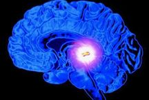 Psychedelics / Articles and informations about psychedelics and psychedelic research