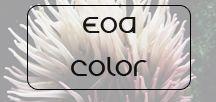 EoA Color / Boards of Color