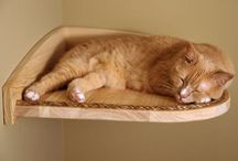 Cat Trees, Rooms, Scratchers / Yes, I am the family cat lady!!!  / by 🐾🌸🌸 🐱 Beth Ann 🐱 🌸🌸🐾