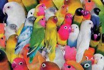 Color Wheel / All the pretty colors.