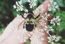 Včely a můry ❁⁎.