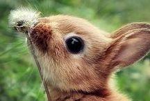 Aww.....Cute!