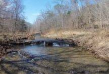 "4/19/16 ABSOLUTE ESTATE AUCTION: 48+/- Acres Selling As a Whole! / ABSOLUTE ESTATE AUCTION:  48+/ Acres with Creek - Selling as Whole! ""Estate of James Grady Cauthen"" 1145 Cauthern Road, Kingston Springs, Tennessee, Cheatham County  Bidding has ended for this auction. Stay tuned to http://www.ComasMontgomery.com for more upcoming auctions.  Privacy, Creek, Property on Both Sides of Road, Hilltop Views.  #land #realestate #forsale #property #acres #tract #absolute #auction #kingstonsprings #tennessee #cheatham"