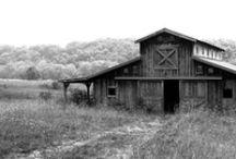 Barns / by Leann Covington