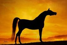Arabians / by Leann Covington