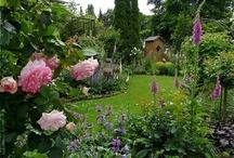 Mein Garten - my garden / Bilder aus meinem Garten