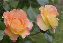 """Rendez-vous aux jardins aux Archives nationales / Retour en images sur la 11ème édition des """"Rendez-vous aux jardins"""" qui a accueilli plus de 2800 visiteurs."""