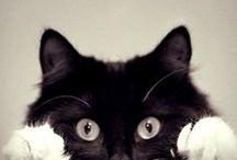 C A T :3' / cute, gatinhos :3
