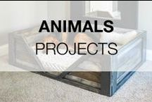 Pallet Projects For Animals / Discover great ideas for pallet projects for animals: garden coops for chickens, rabbits and other fellow animals, dog and cat houses, feeders for pets and even bunk beds for your little friends. More inspiration here: http://www.1001pallets.com/diy-pallet-garden/pallet-animal-houses-supplies/