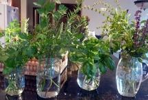 Celtic Herbals