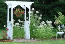 garden / by cathy parkinson