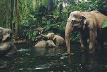 animals ✨