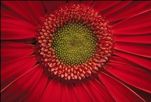 All things RED.... / my favorite color....and make me very happy! / by Lissa Pauld