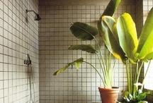 (cactus+succulent)+verde / by Mar Rigopoulou