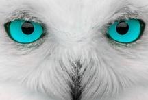 Owls / by Lynne Akalin