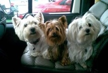 Pets / My disappeared great friend Harder, my beautiful friends Luna Wendy Winnie Nike and their friends