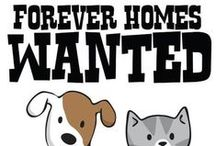 Humane Society of Fremont County: Animal Adoption / The Humane Society of Fremont County encourages you to look for the adoptable animals in your area when choosing a new pet.  http://www.humanesocietyfremontcounty.org/