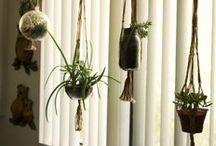 plants laboratory /