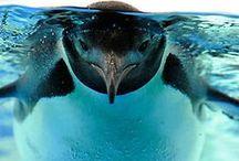 ..SeaWorld..