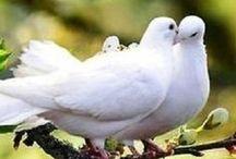 αγνό άσπρο -White