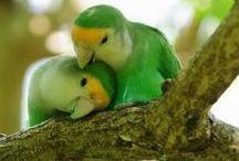 Πουλιά - birds