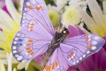 Butterfly - πεταλούδες