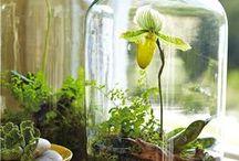 orchid - storczyki