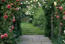 Garden / food plants, ornamentals, and more