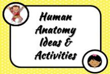 Science: Human Body / From the basics to the more complex. Ideas for teaching about the human body in the classroom.