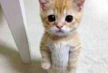 Cute*.*