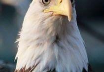 Big birds / De mooiste vogels