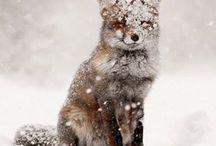 Winter ❤