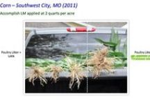 Field Trial Comparisons / Images comparing crops grown with Agricen products and those without. / by Agricen