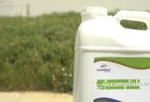 Accomplish® LM / Accomplish LM is an innovative biochemical fertilizer catalyst specifically formulated for use with liquid fertilizer and broadcast applications. http://www.agricen.com/products/accomplish/ / by Agricen
