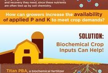 Cool Ag Infographics / Infographics about farming, agriculture and plant science / by Agricen