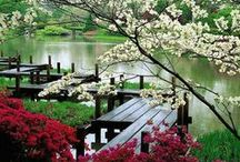 Japanese Gardens / The Japanese Gardens are just part of the beauty of Japan.  The creative arts include origami and sushi.