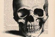 Skulls, bones & skeletten
